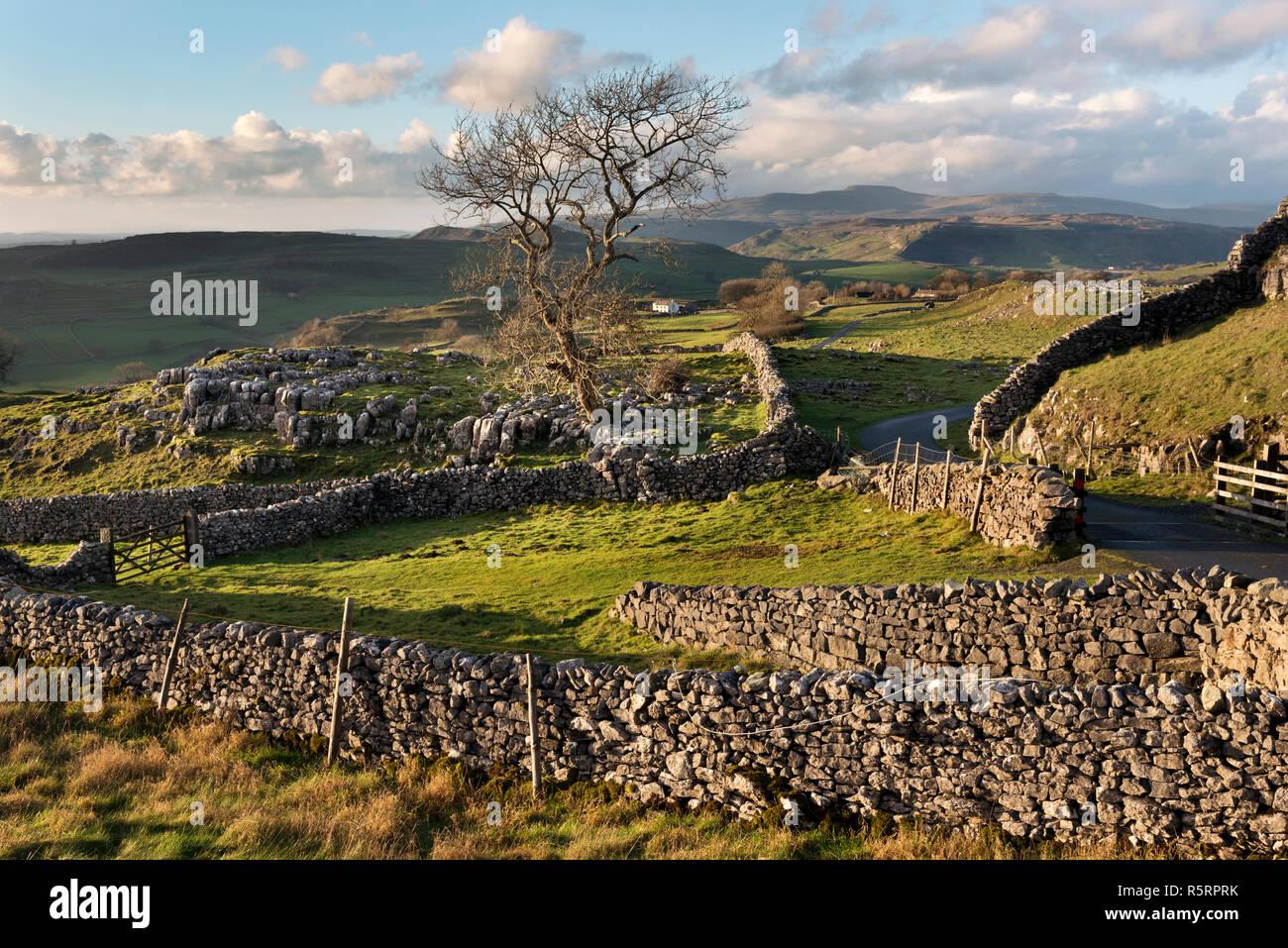 Winskill Stones limestone pavement area, with Ingleborough peak on the horizon. Langcliffe, Yorkshire Dales National Park. - Stock Image