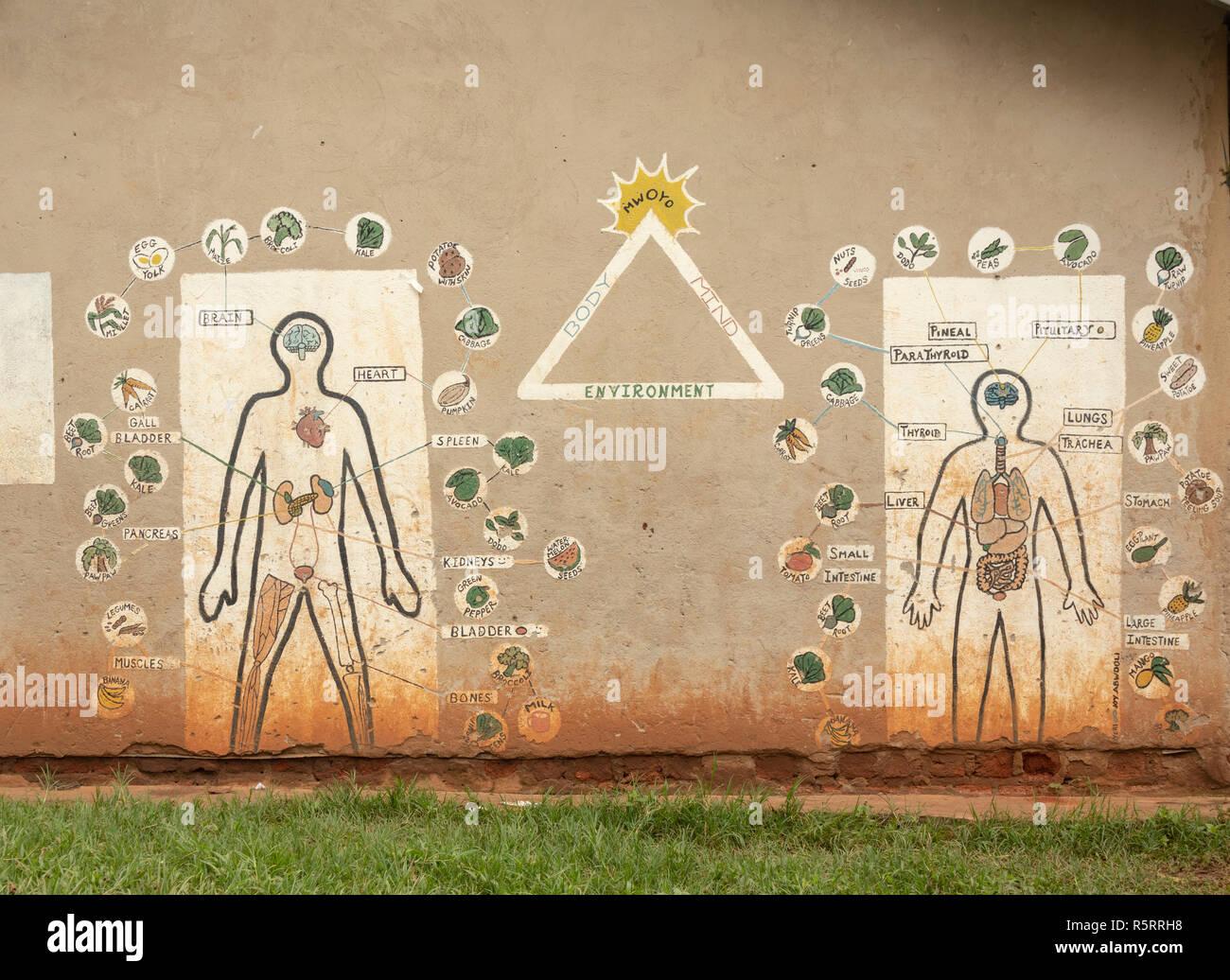 sign for body parts in primary school, Bigodi, western Uganda, Africa - Stock Image