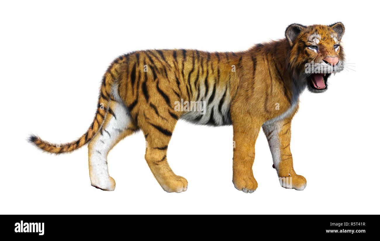 Royal Bengal Tiger Cut Out Stock Images Pictures Alamy