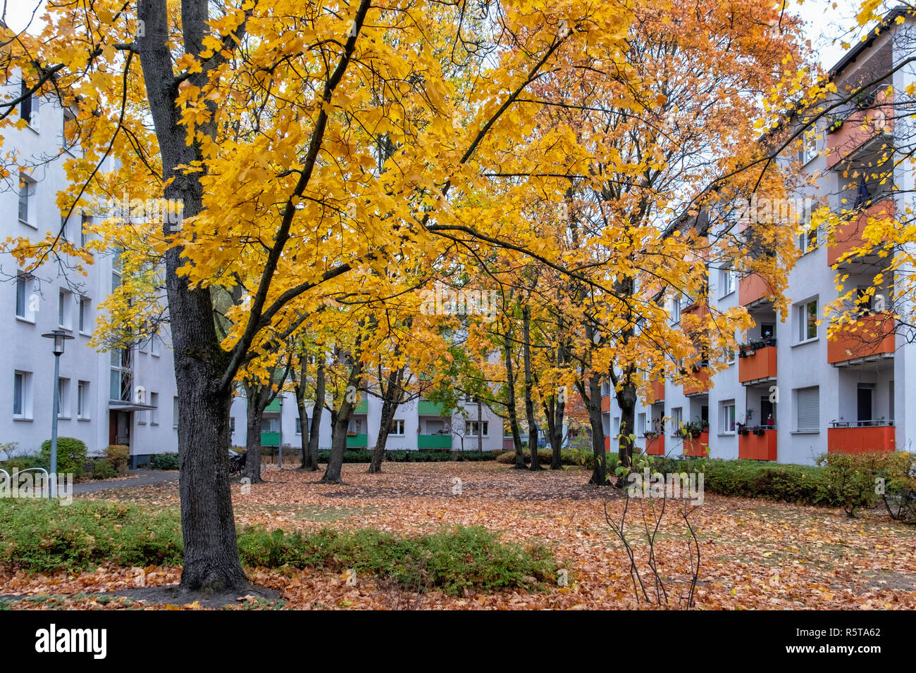 Berlin,Reinickendorf, Apartment buildings and colurful Autumn Foliage in Bernauer Strasse. - Stock Image