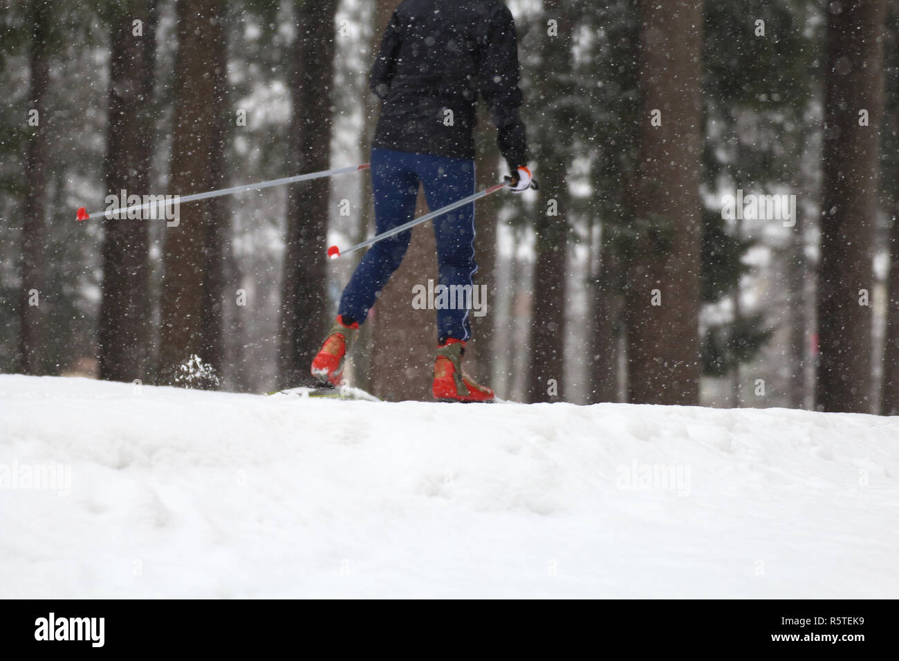 Particular of Cross-country skiing classic technique practiced by woman - Stock Image