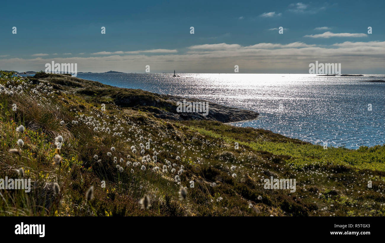 A beautiful view of the Norwegian Atlantic coast with spring flowers in clear weather. Surroundings Bud - Stock Image