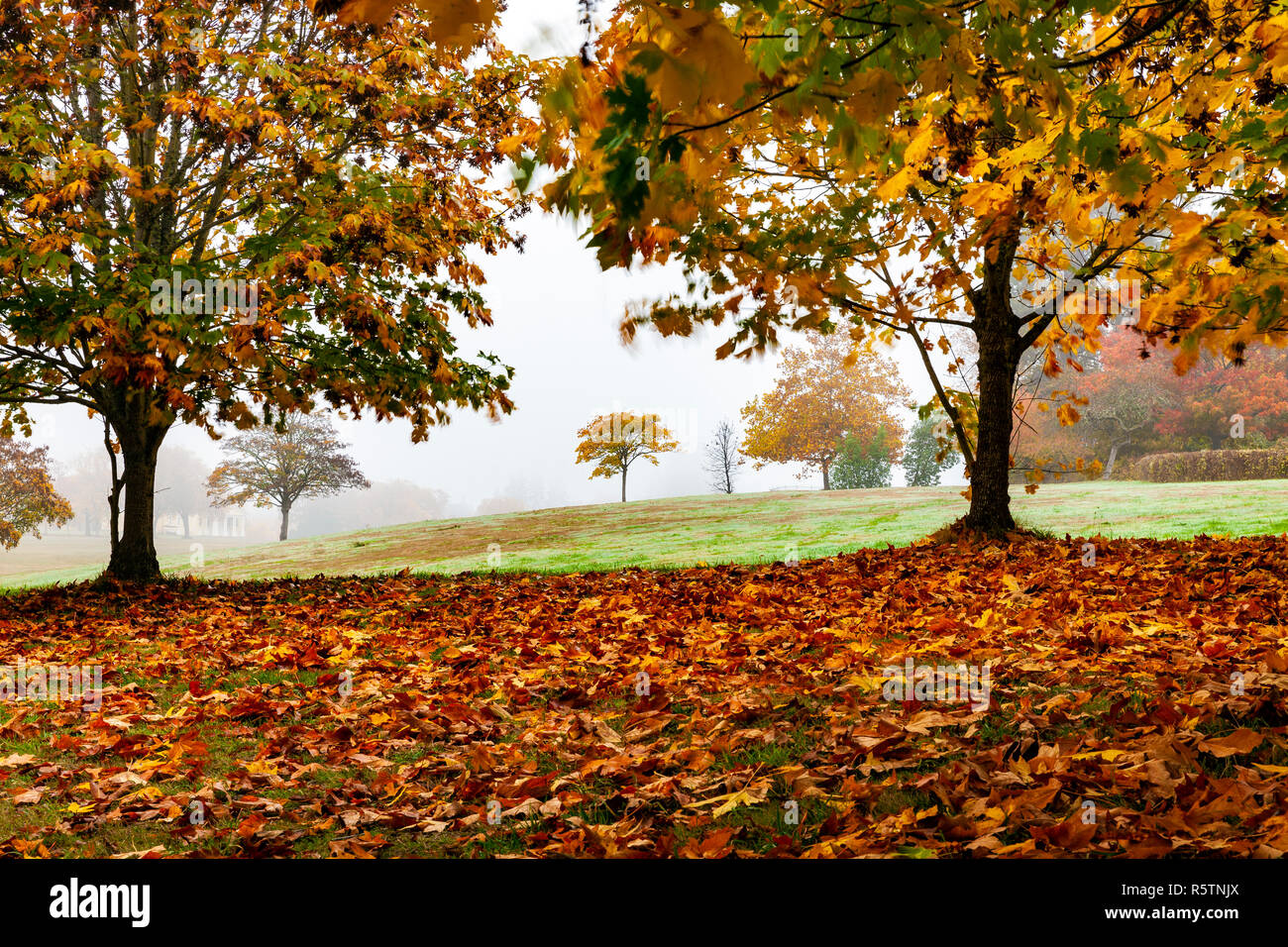 WA17013...WASHINGTON - Foggy autumn day in Seattle's Discovery Park. - Stock Image