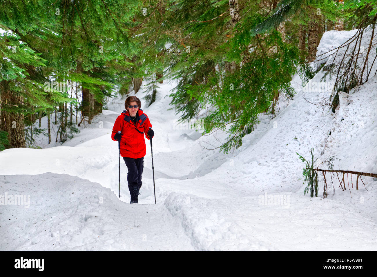 42,780.01123 woman hiker hiking and having fun exercising on a wide trail in snowy winter conifer forest, Mount Hood National Forest, Oregon USA - Stock Image