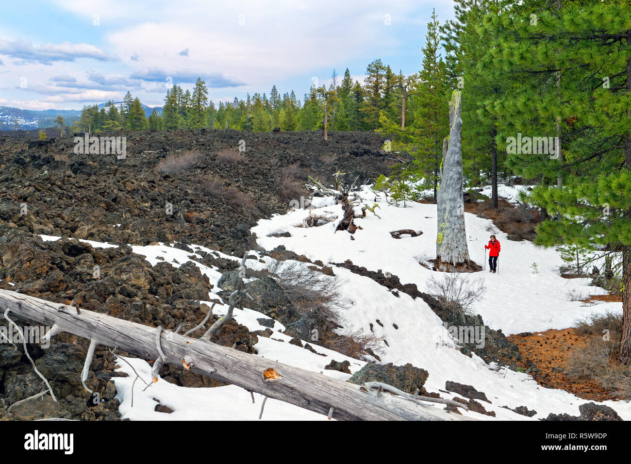 42,834.01755 Woman hiking in winter standing by a snowy black lava bed with dead trees on edge of Ponderosa pine trees (Pinus ponderosa) forest - Stock Image