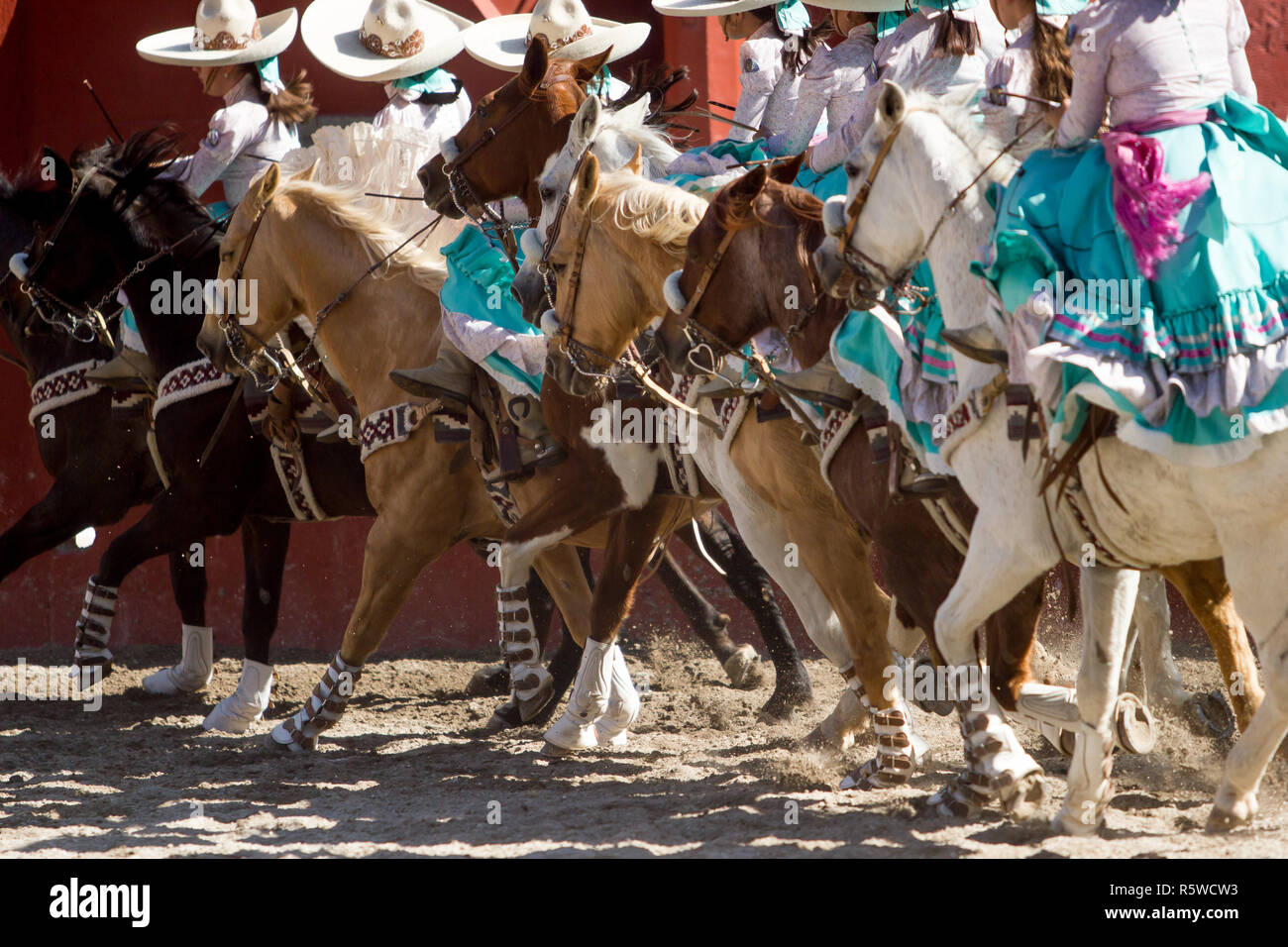 Trick Horse Stock Photos Amp Trick Horse Stock Images Alamy