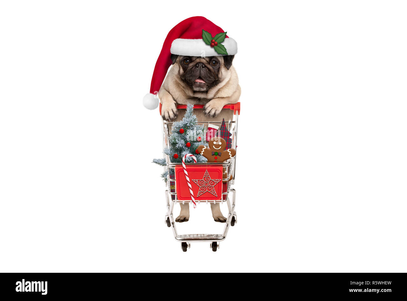 cute happy seasonal pug puppy dog with shopping cart full of christmas decoration, candy and tree, isolated on white background Stock Photo