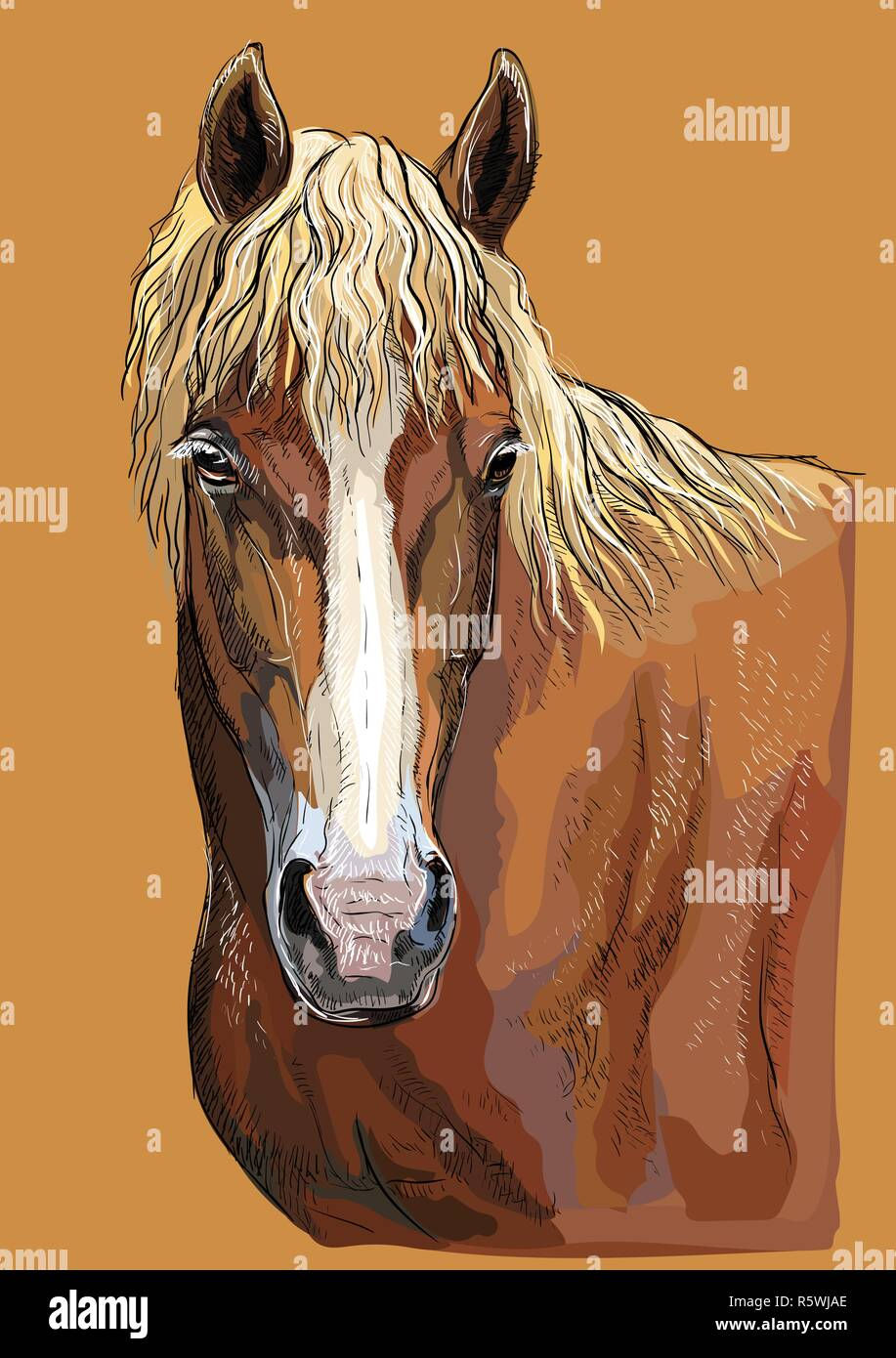 Colorful hand drawing portrait of Russian Heavy Draft horse. Horse head  in profile isolated vector hand drawing illustration on beige background - Stock Vector