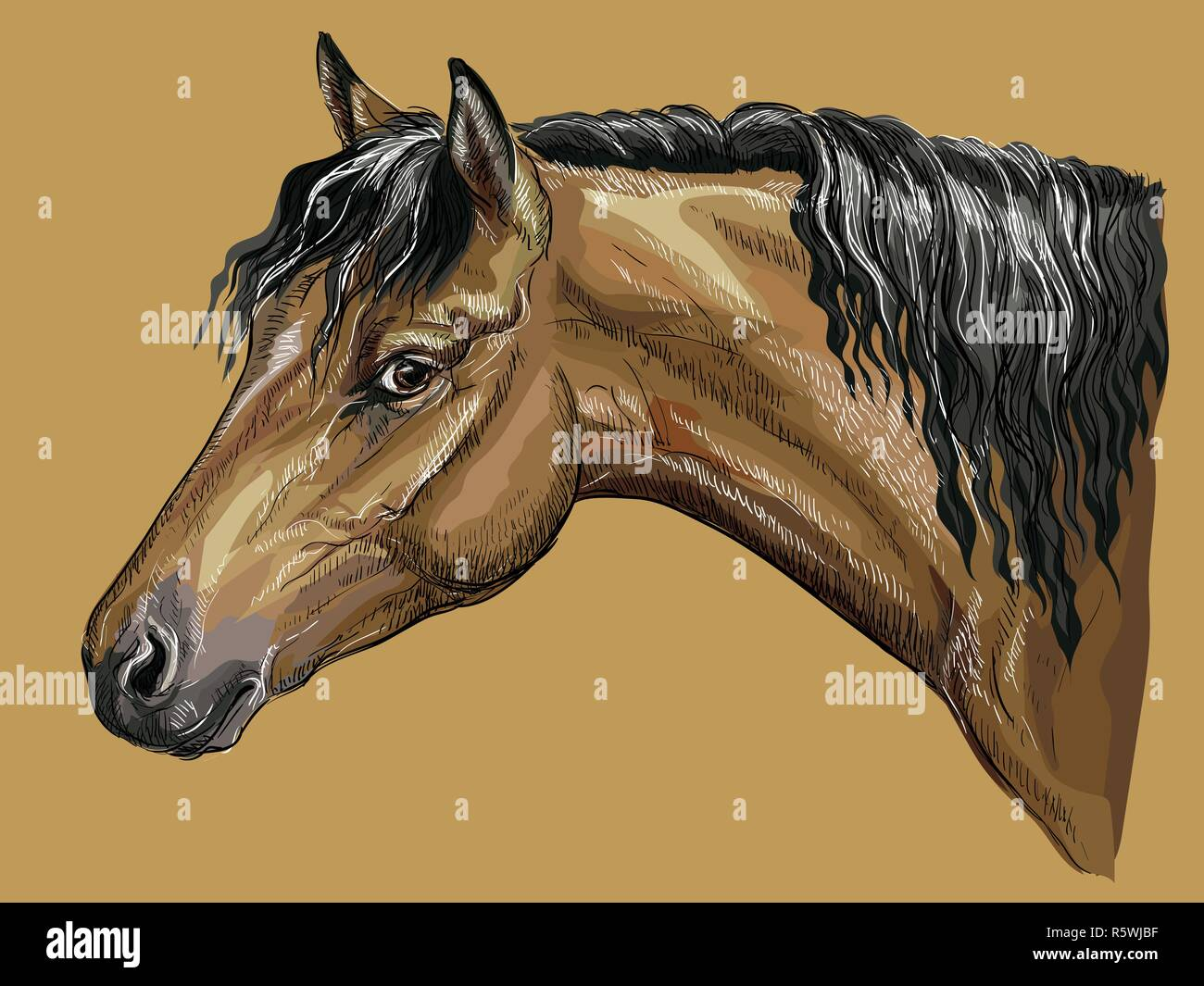 Colorful hand drawing portrait of bay Welsh Pony. Horse head with long mane in profile isolated vector hand drawing illustration on beige background - Stock Vector