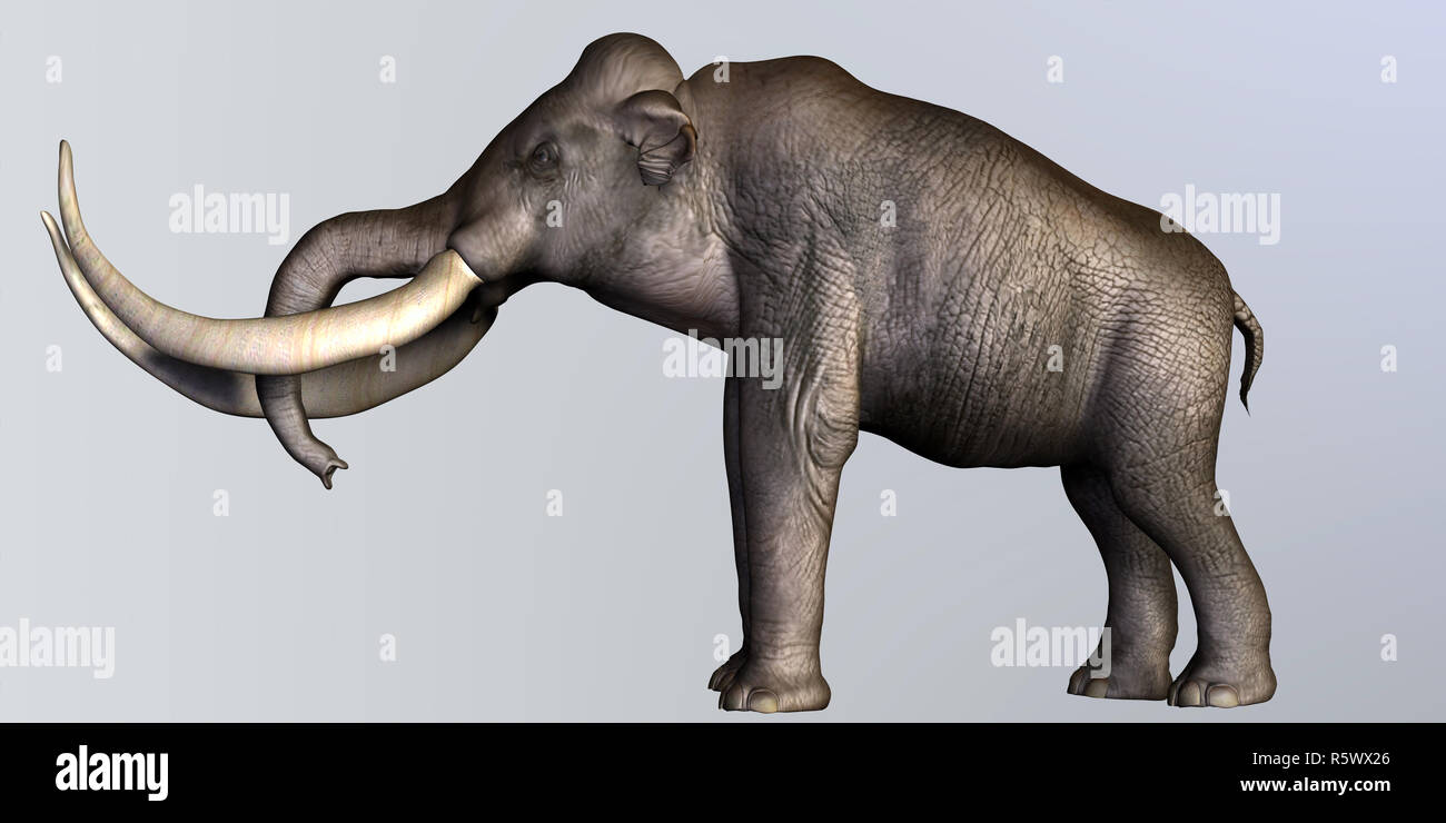 Columbian Mammoth Side Profile - Stock Image