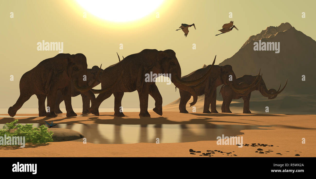 Columbian Mammoth - Stock Image
