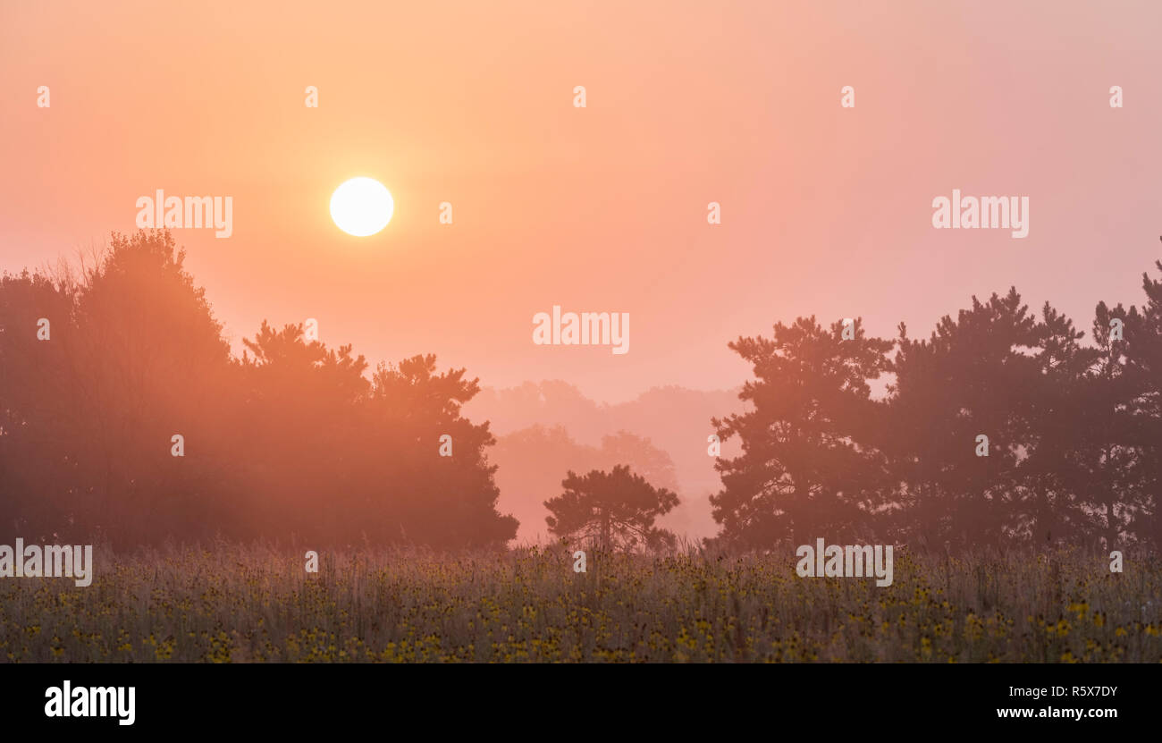 Sunrise over prairie, Dakota County, late summer, MN, USA, by Dominique Braud/Dembinsky Photo Assoc - Stock Image