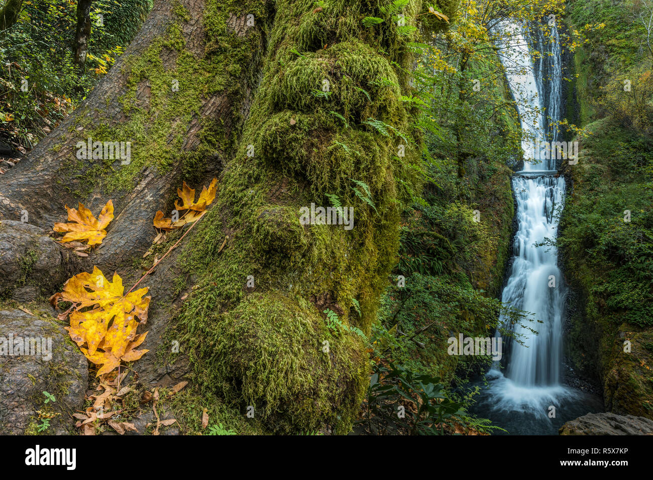 Bridal Veil Falls, 118 feet in height, October, Multnomah County, OR, USA, by Dominique Braud/Dembinsky Photo Assoc Stock Photo