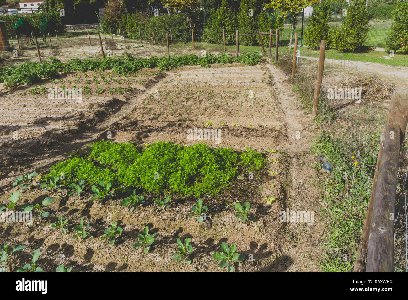 Urban gardening. City urbanized vegetable garden. Growing, farming vegetables in the city. Agriculture of organic hand grown food. Self sustained syst - Stock Image