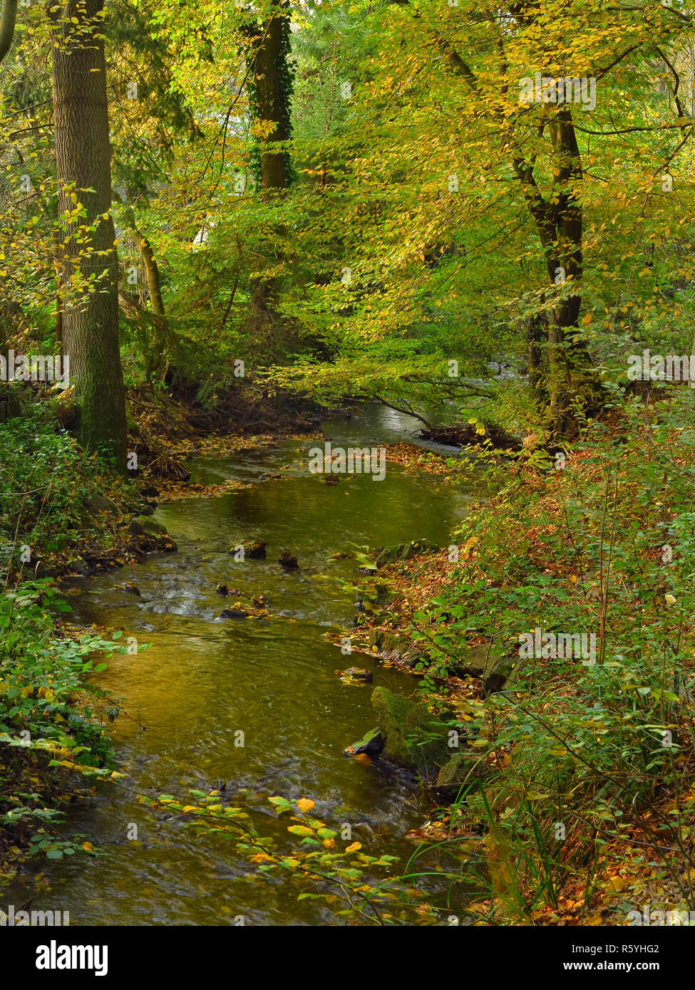 bachtal in autumn in the arnsberger wald nature park Stock Photo