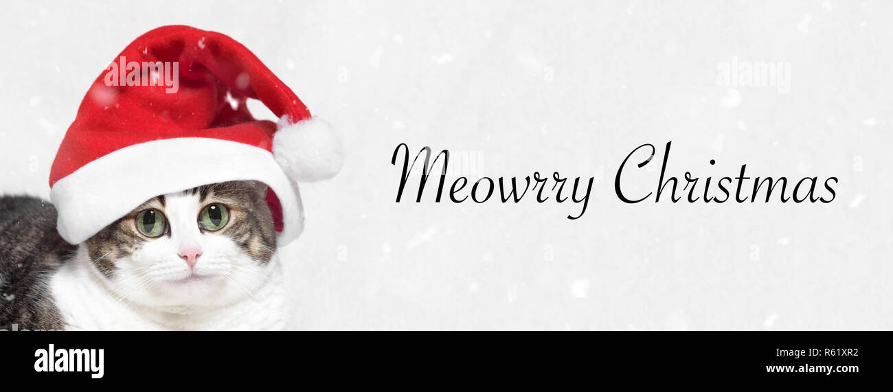 Christmas banner. Adorable Cat in Santa claus hat. Text Meowrry Christmas - Stock Image