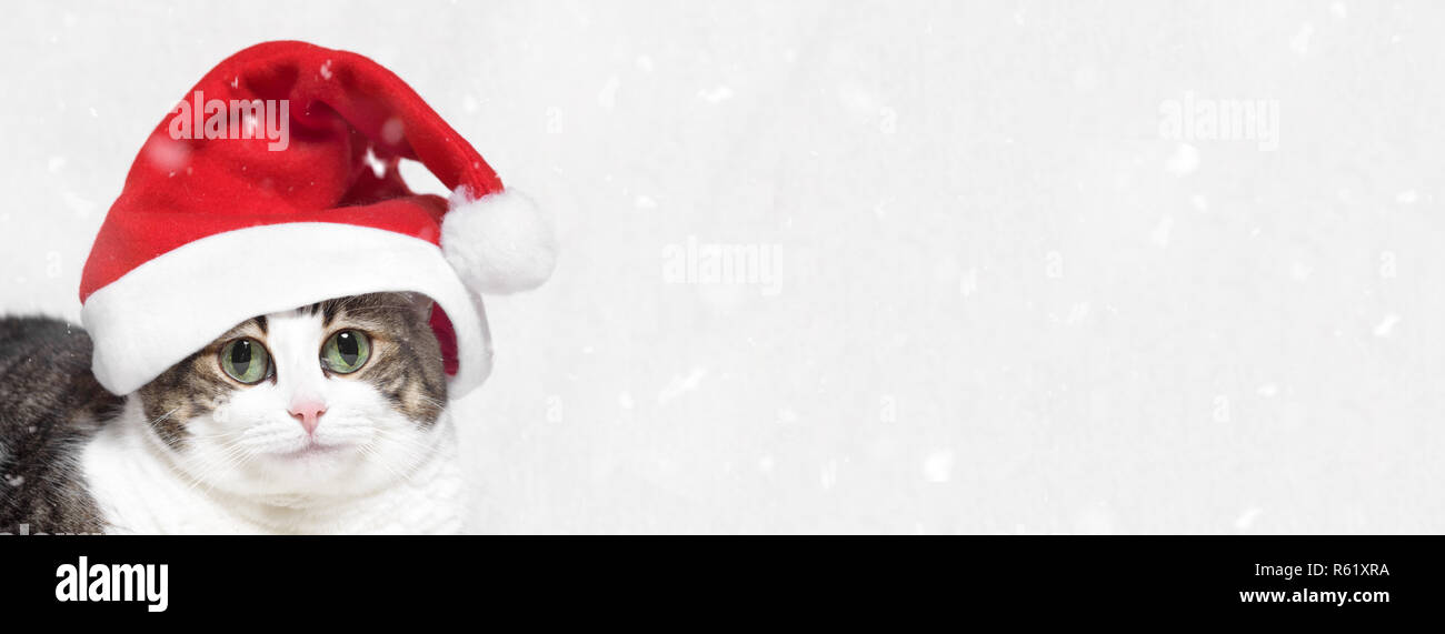 Christmas banner. big eyes funny cat, in Santa Claus hat, and snow flakes on white background - Stock Image