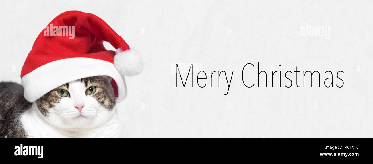 Christmas banner. Adorable Cat in Santa claus hat. Text Merry Christmas - Stock Image