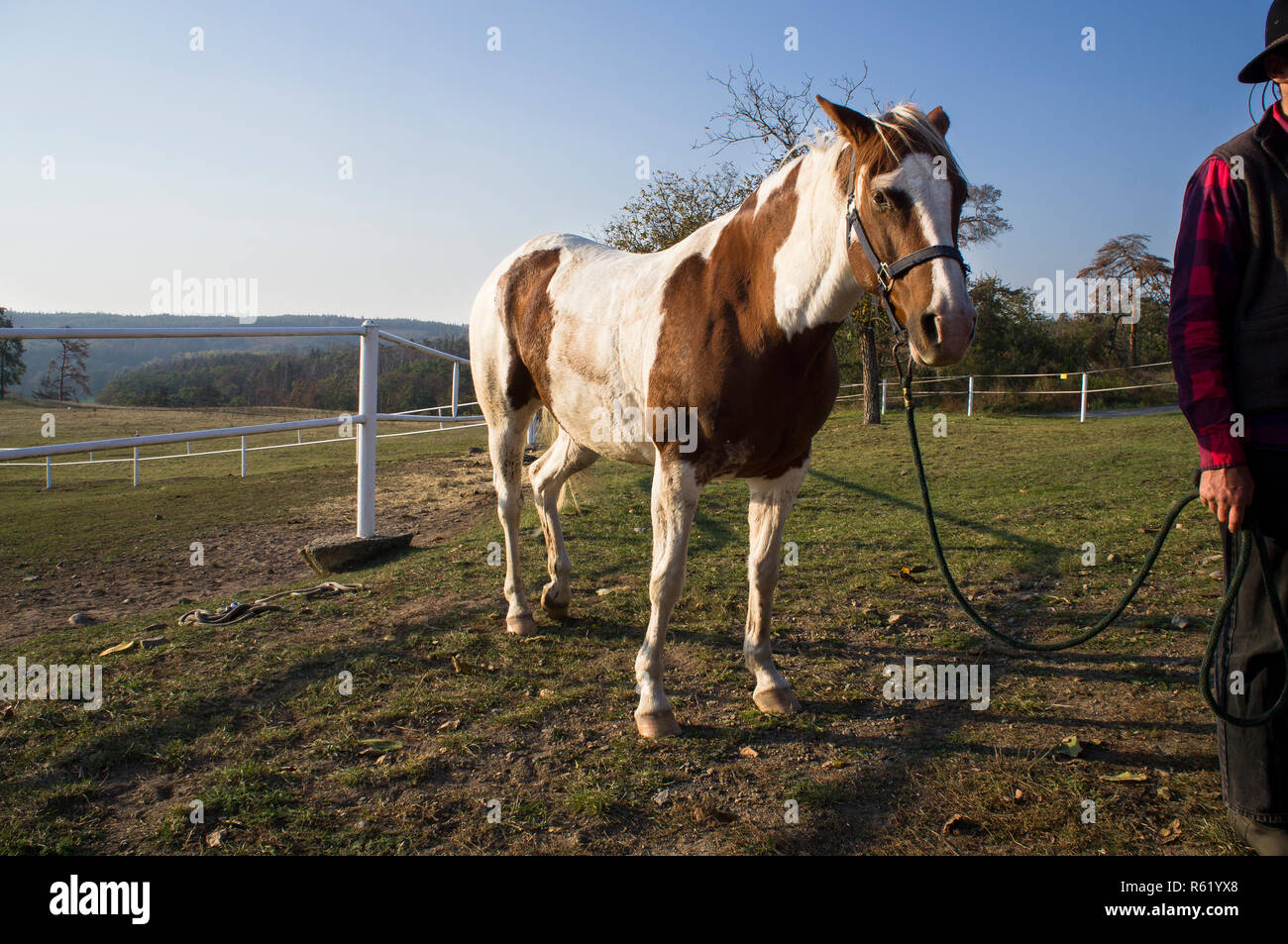 Spotted Coat Stock Photos & Spotted Coat Stock Images - Alamy