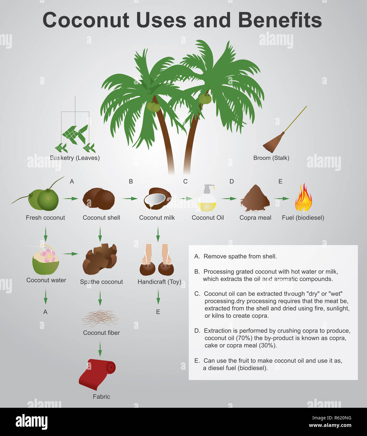 Coconut Tree Uses Stock Photos Amp Coconut Tree Uses Stock