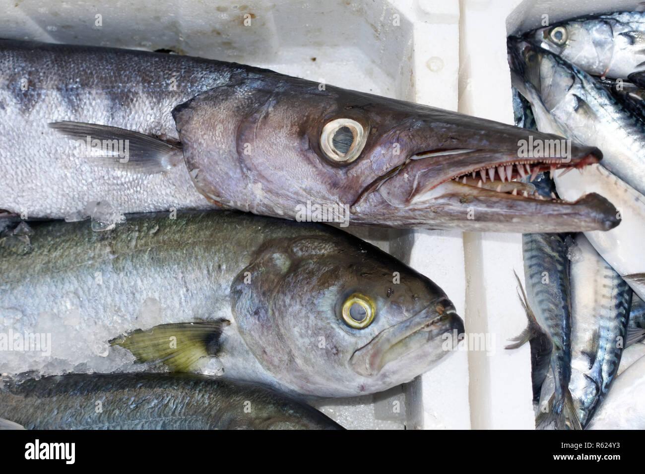 fish market barracuda Stock Photo