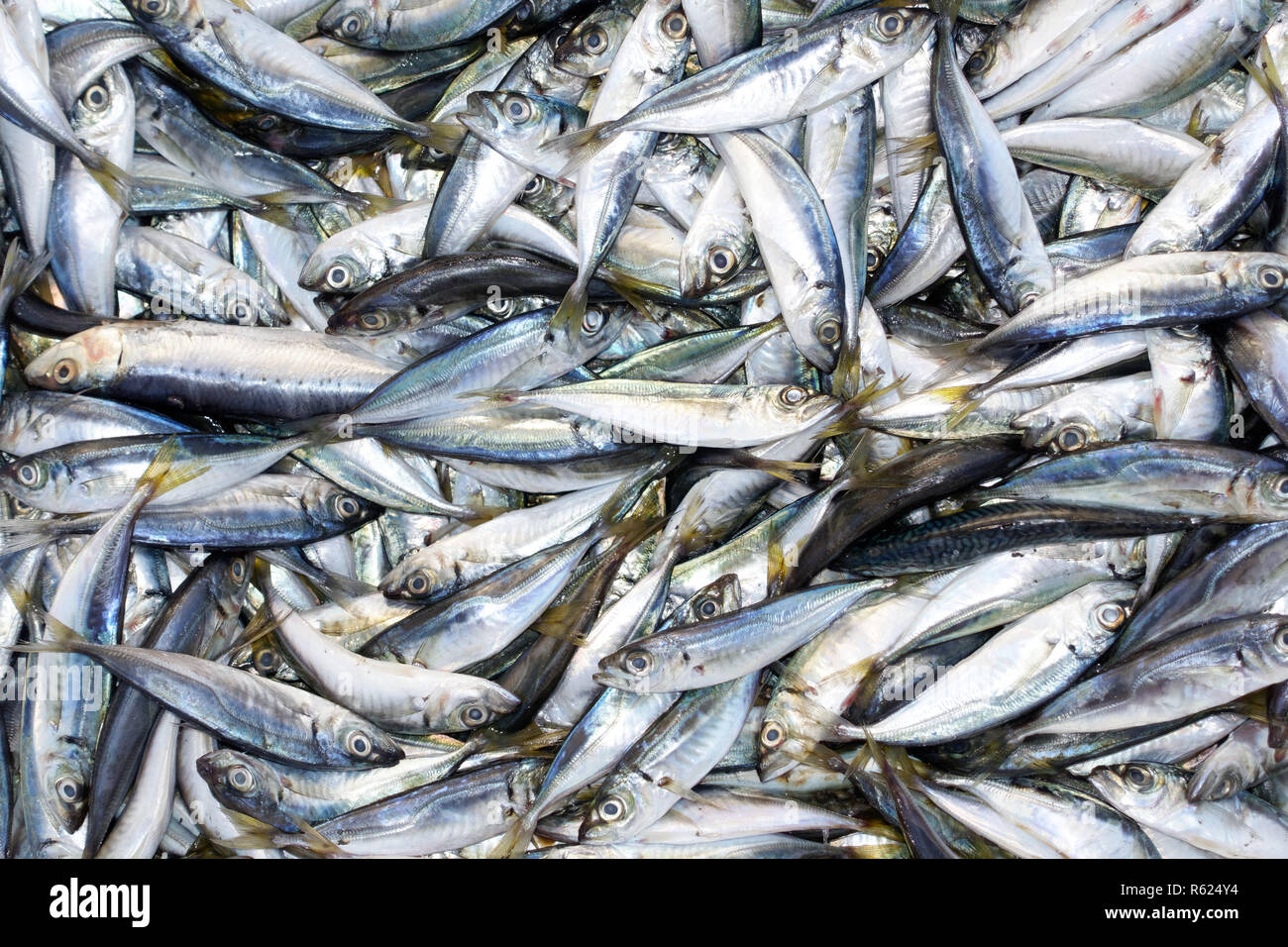 bodrum fish market Stock Photo