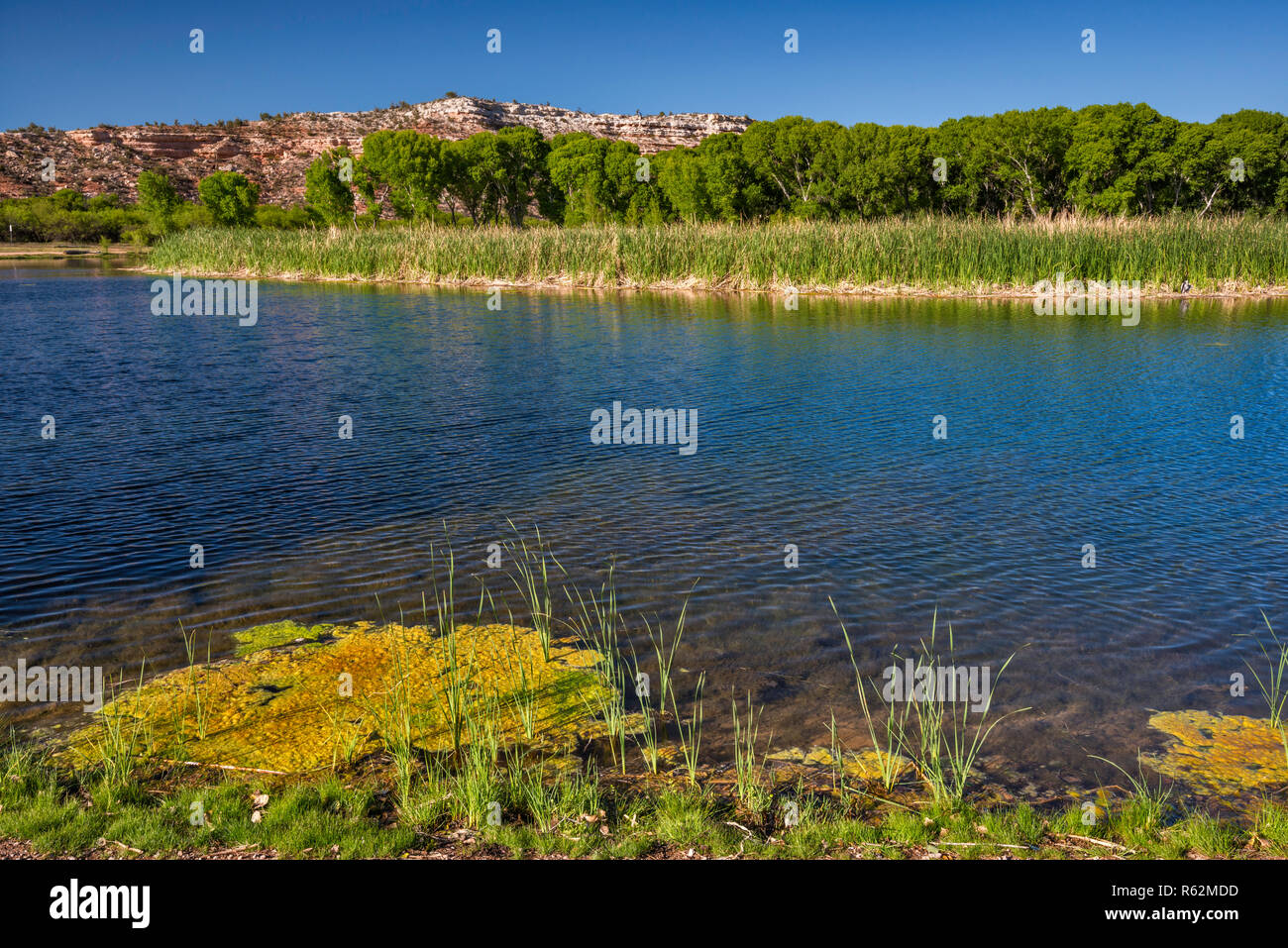 Lagoon at riparian zone in Verde River Valley, Dead Horse Ranch State Park, near Cottonwood, Arizona, USA - Stock Image
