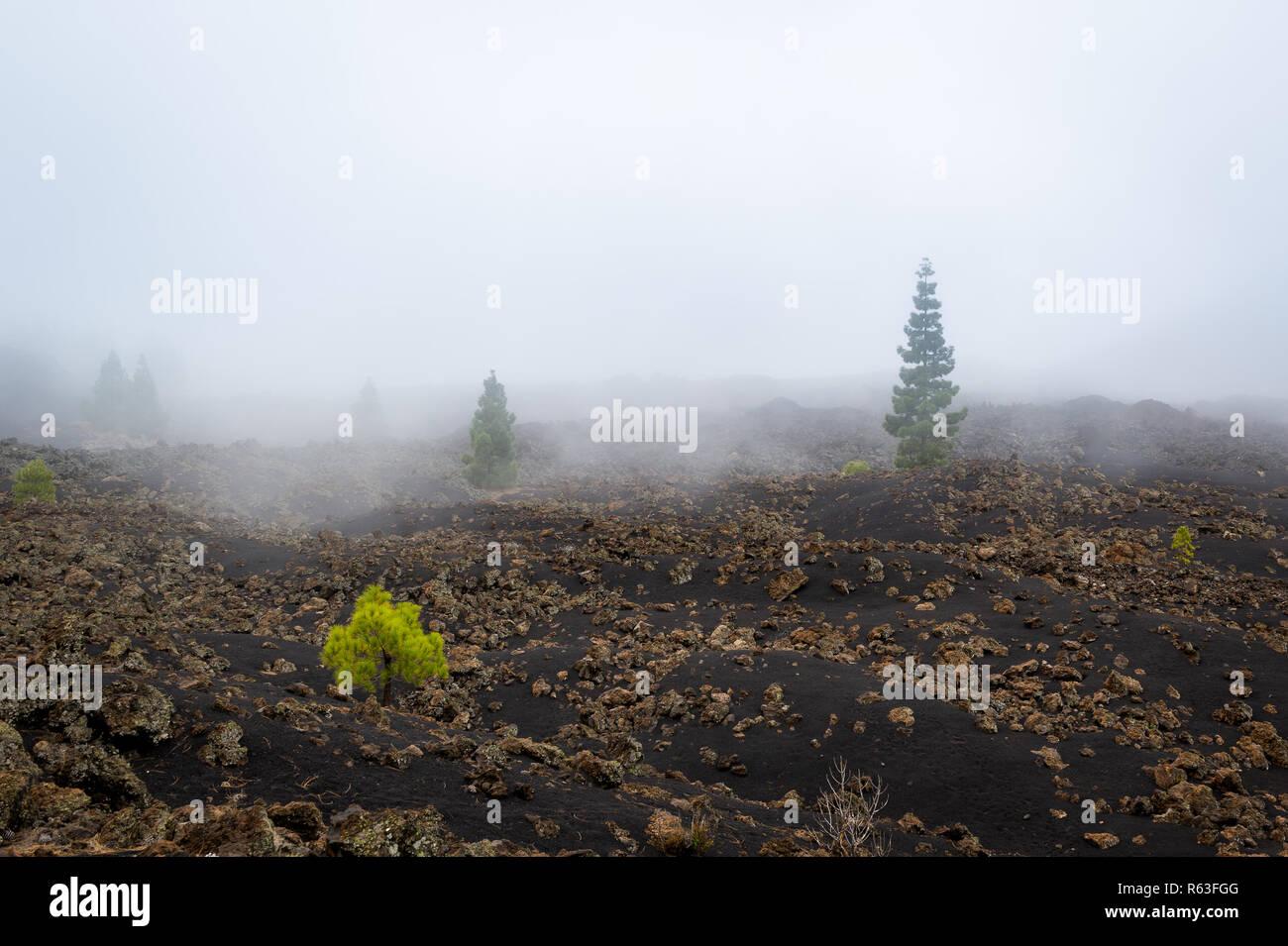 Black volcano fields. Chinyero, Tenerife island. - Stock Image