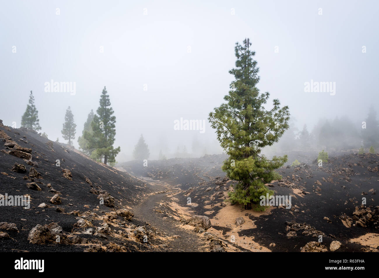 Mystery paths of Chinyero volcano - Stock Image