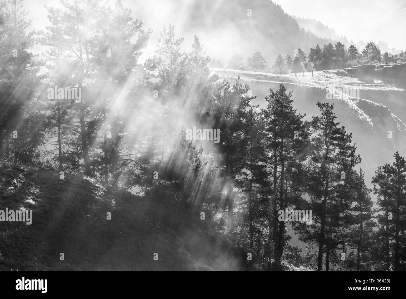 Morning mist in the forest, sun's rays breaking through the fog, Georgia, Tusheti - Stock Image