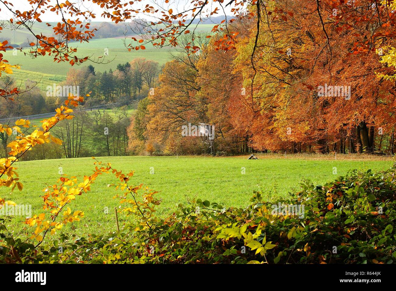 fresh autumn colors - Stock Image