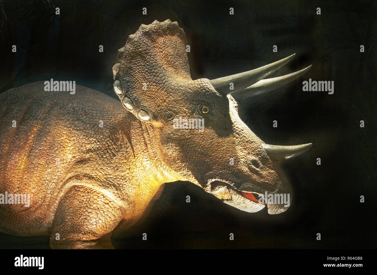 Portrait of a Triceratops, a genus of North American herbivorous ceratopsid dinosaur that existed during the late Maastrichtian stage of the late Cret - Stock Image