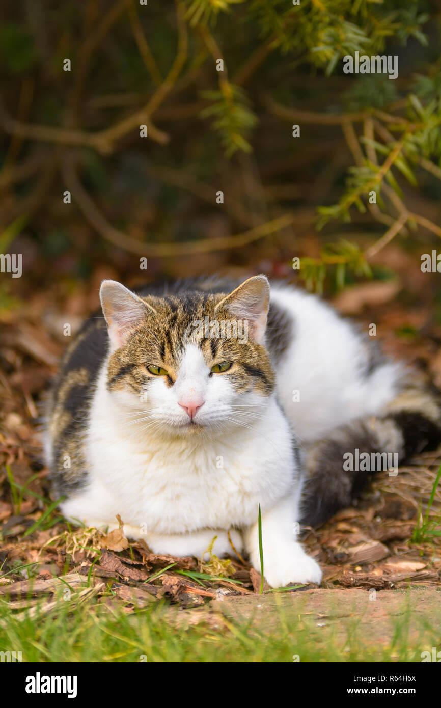 Eine Katze liegt entspannt im Garten unter Bäumen - Stock Image