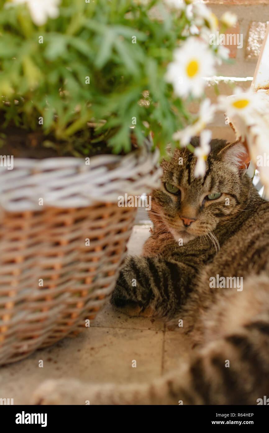 Katze auf einem mit Balkon mit Katzennetz - Stock Image