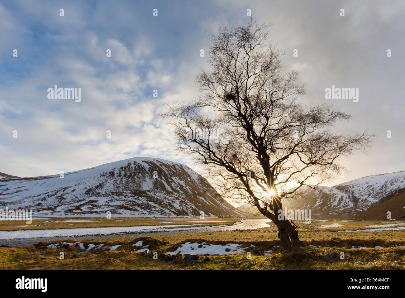 Sun shining though bare branches of solitary tree along River Findhorn at sunset in winter in the Strathdearn valley, Scottish Highlands, Scotland, UK - Stock Image
