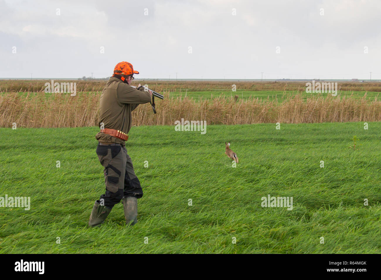 Hunter with rifle shooting fleeing brown hare (Lepus europaeus) in grassland during the hunting season in autumn - Stock Image