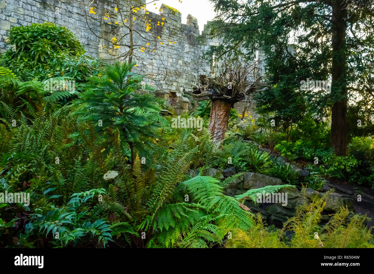 The Fern Garden planted in the Museum Gardens in York includes native and non-native species including a Ginko Biloba and an Upside-Down tree. - Stock Image