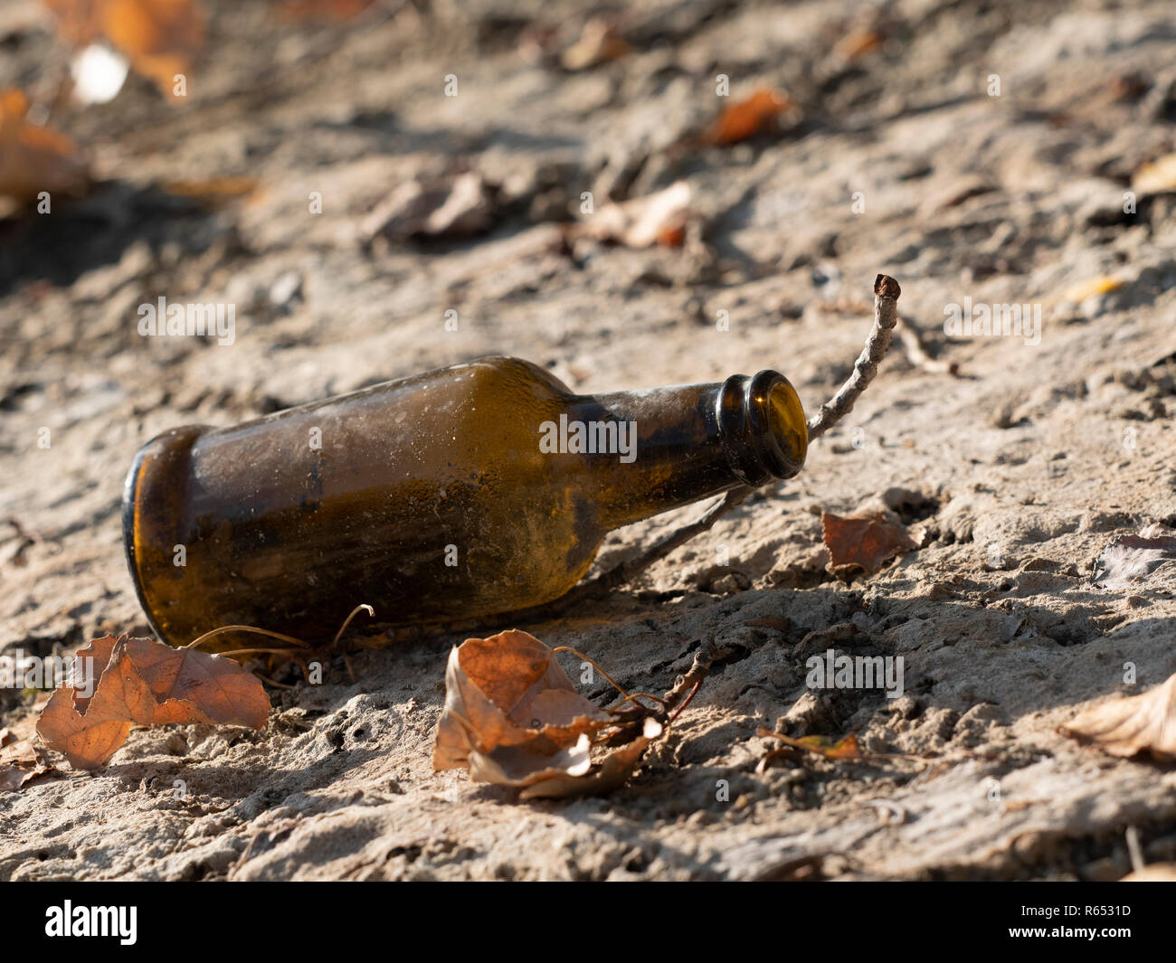 An old brown glass beer bottle discarded on the banks of dried up lake with leaves and twigs in late summer - Stock Image