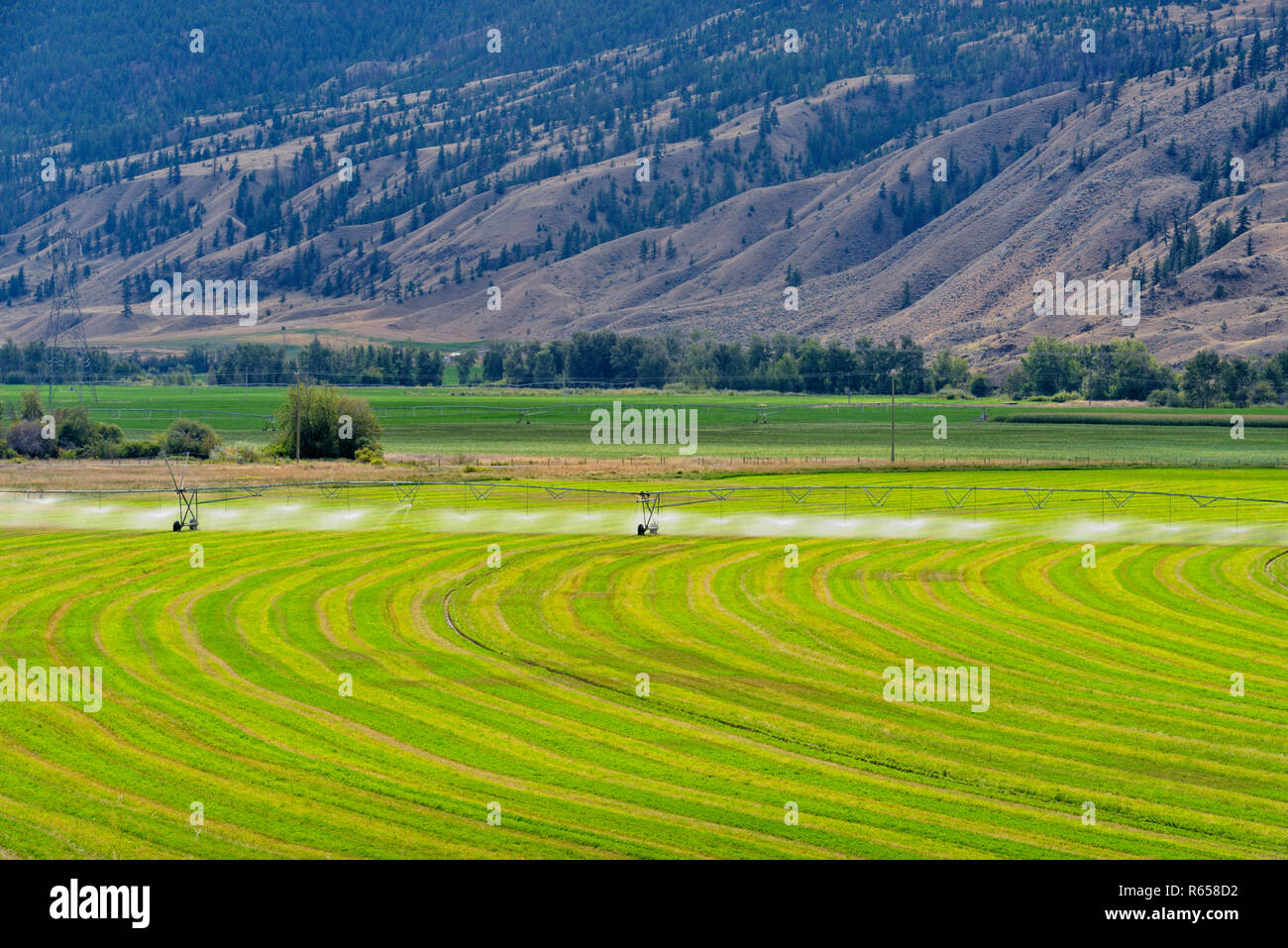 Irrigating a crop in the Thompson River Valley bottomlands, near Cache Creek, British Columbia, Canada - Stock Image