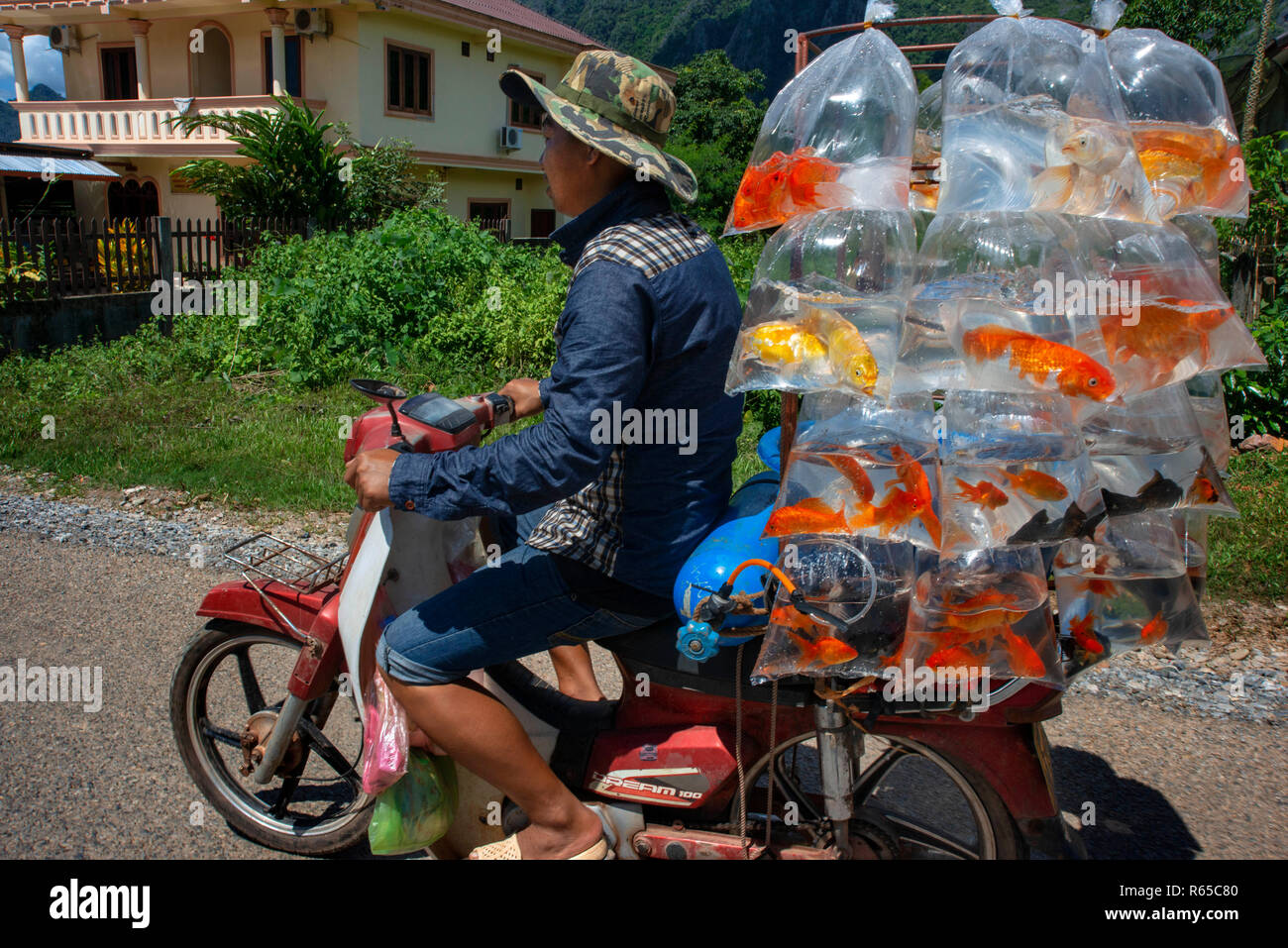 A man with a motorcycle transports fish for sale. Vang Vieng village, Laos - Stock Image