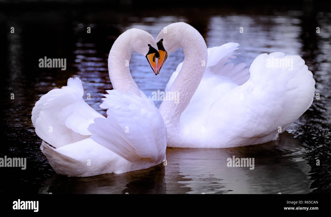 Falling in love - Stock Image