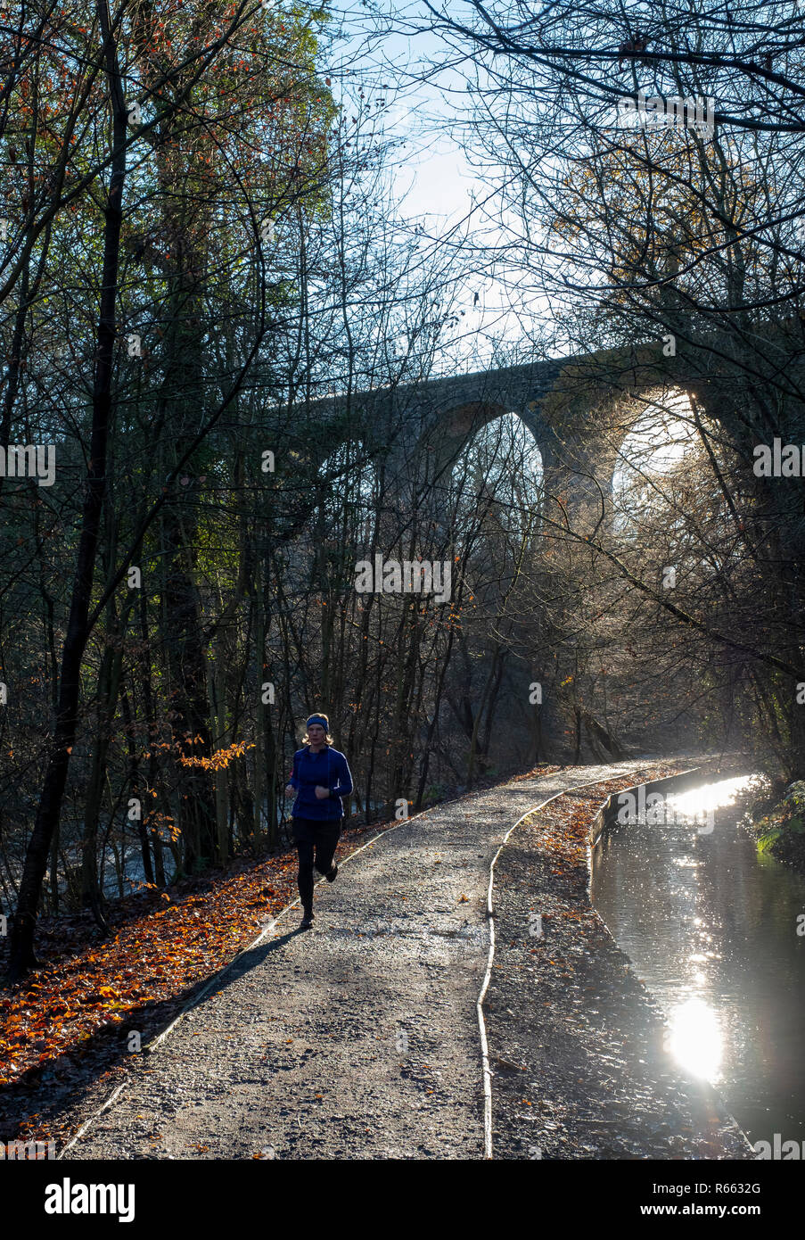 A lone runner on a frosty morning in Almondell and Calderwood Country park, West Lothian. - Stock Image