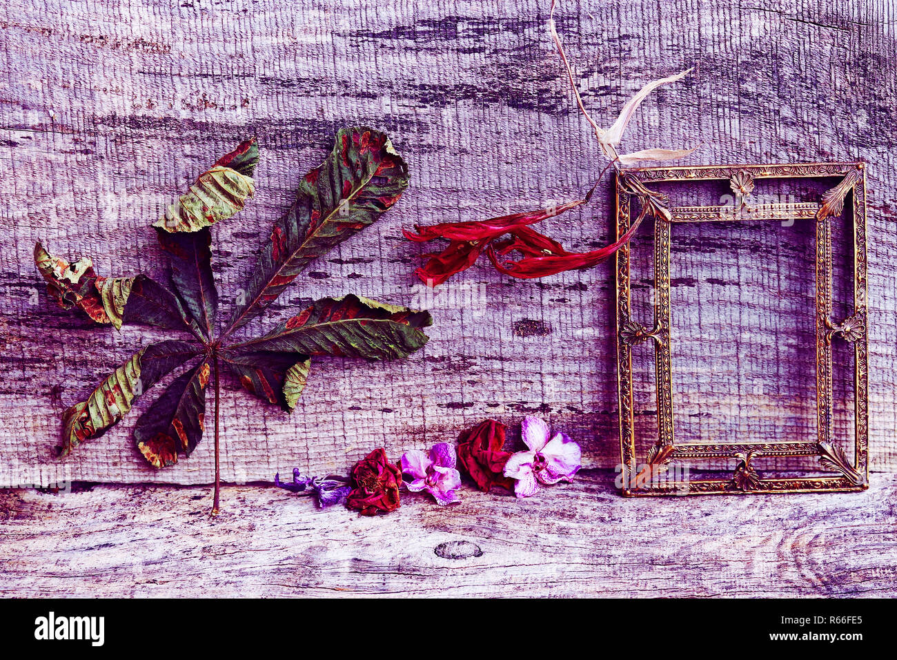still life with flowers,leaves and a brass picture frame on a wooden background in purple and red Stock Photo