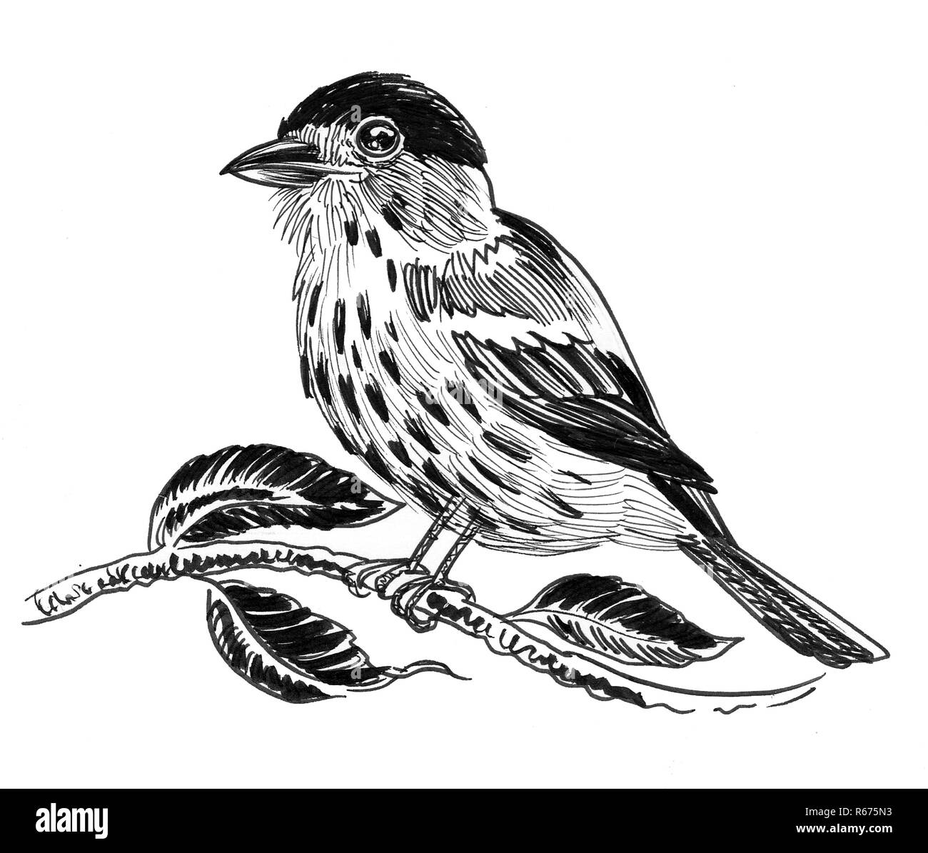 Cute Bird Sitting On A Tree Branch Ink Black And White Drawing Stock Photo Alamy