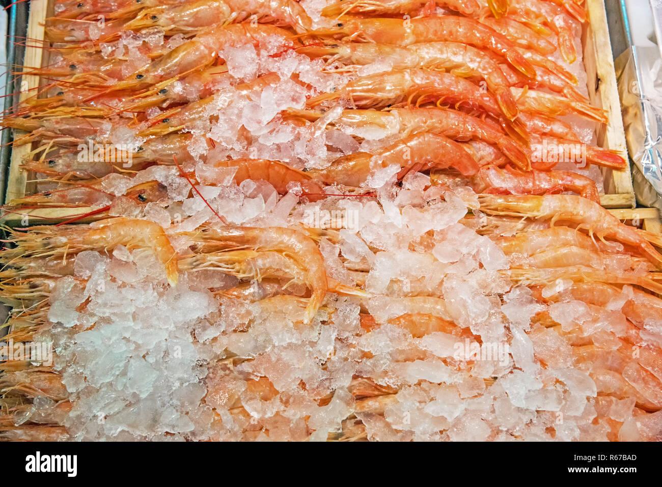Frische Garnelen auf einem Markt in Madrid - Stock Image