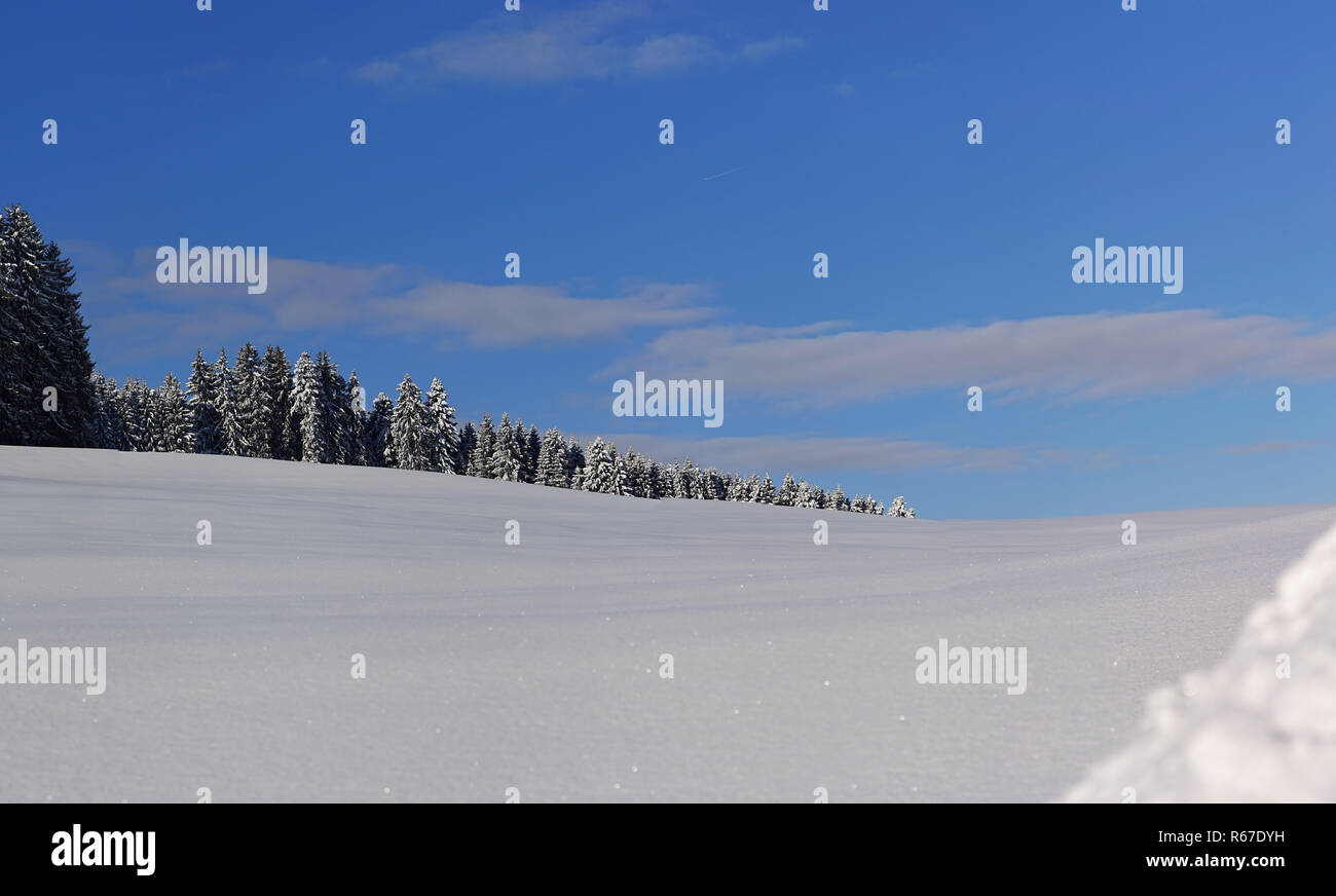 snowy hill at the edge of the forest in the westallgäu - Stock Image