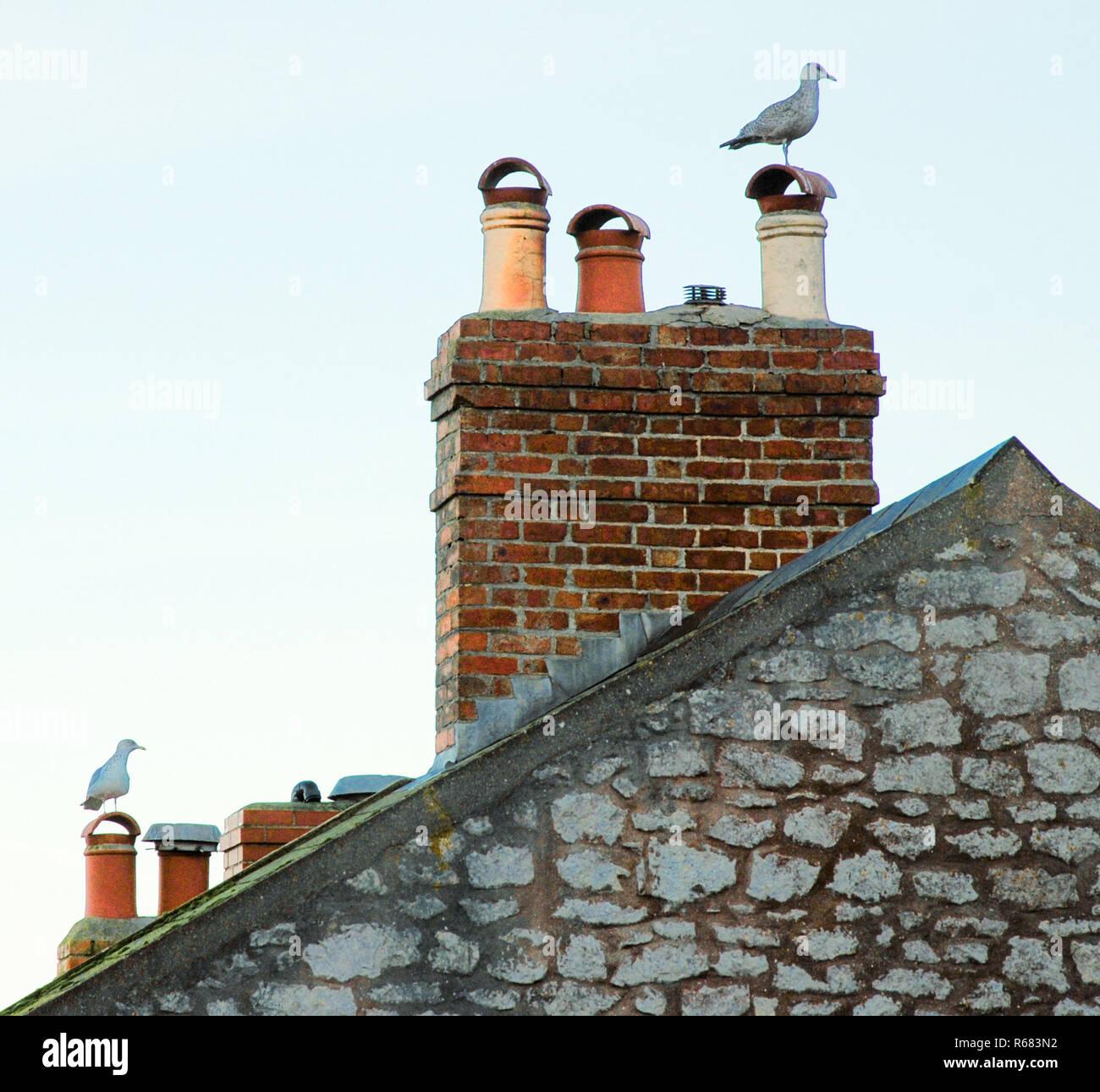 Portland, Dorset, UK. 4th December 2018. Seagulls rest on rooftops in Fotuneswell, Isle of Portand Credit: stuart fretwell/Alamy Live News Stock Photo