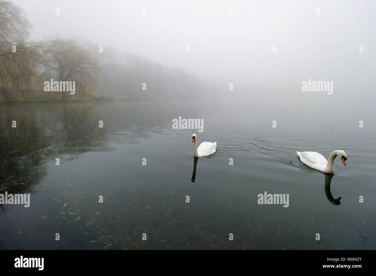 Bolton, Lancashire. 4th Dec 2018. UK Weather: Atmospheric misty scenes at Moses Gate Country Park, Bolton, Lancashire. Freezing temperatures overnight cause a widespread lingering fog over the North West of the country. Picture by Paul Heyes, Tuesday December 04, 2018. Credit: Paul Heyes/Alamy Live News - Stock Image