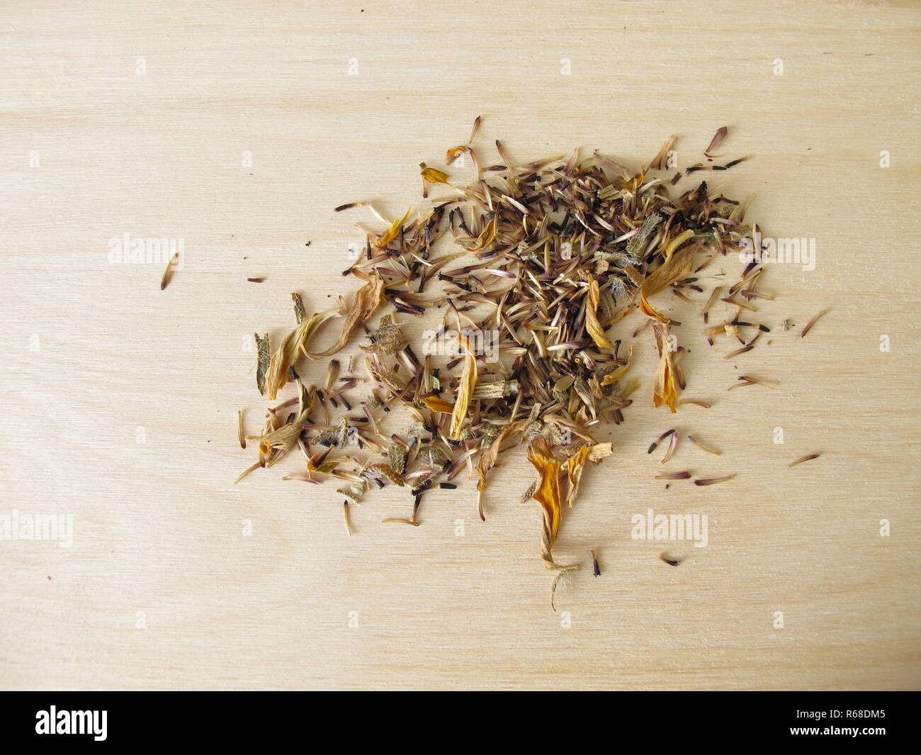 homegrown seeds of coneflower flowers - Stock Image