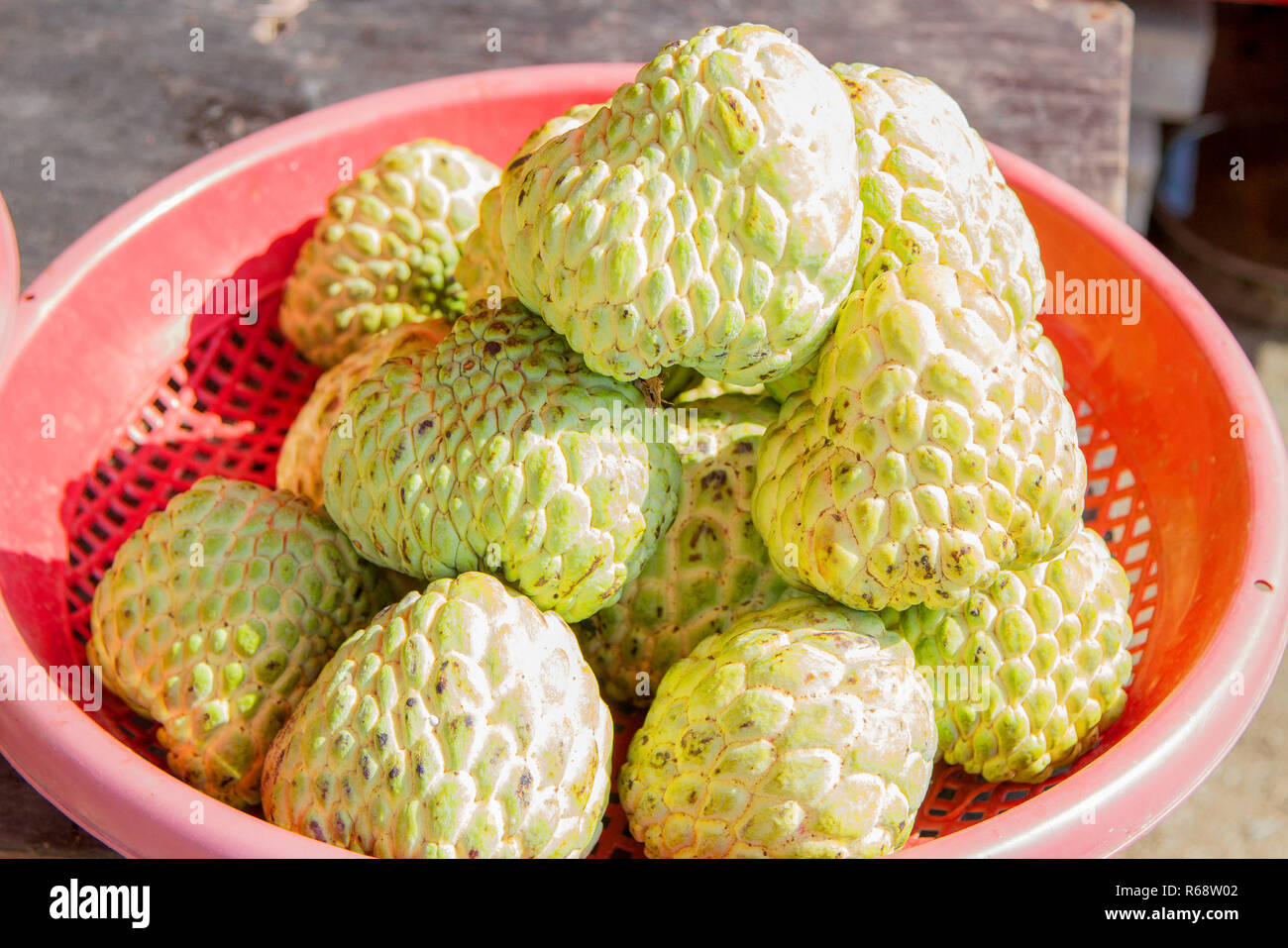 Custard Apple Pictures Pvt Ltd